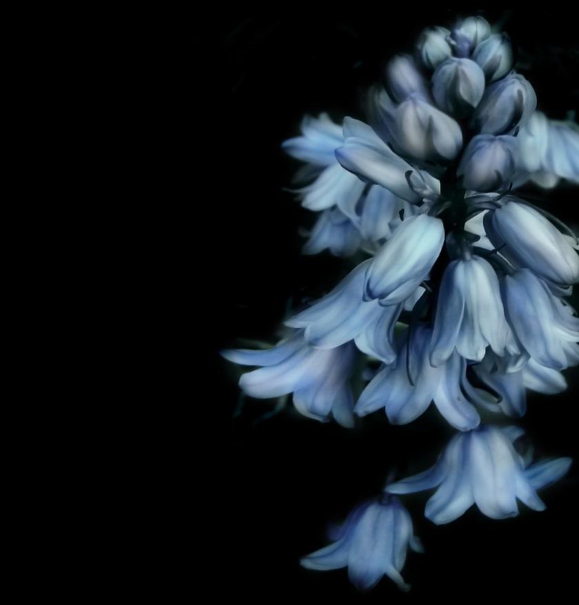 bells-flower-658751